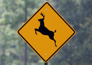 Pennsylvania is consistently listed as one of the top states for deer vs. car collisions