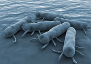 bacteria food poisoning