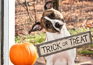 Make Halloween safe for your dog—and trick or treaters