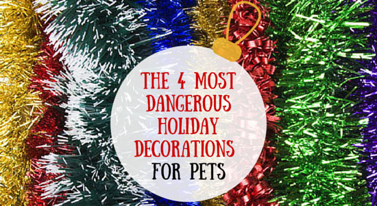 4 most dangerous decorations for pets