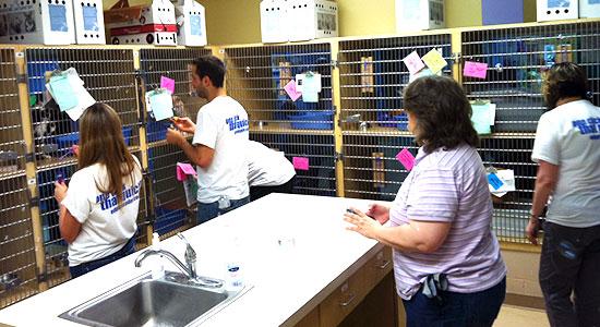 community service volunteering at animal friends