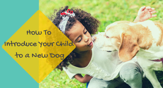 How to Introduce Your Child to a New Dog