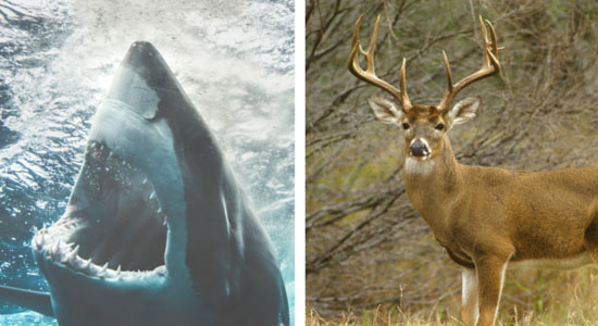 Why Deer Are More Deadly Than Sharks