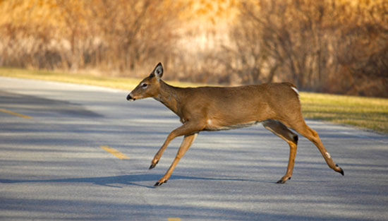 Pennsylvania deer-related car accidents