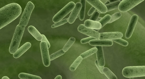 Listeria food poisoning outbreak