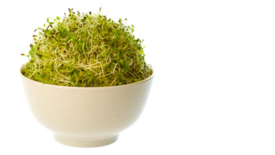 Alfalfa sprouts linked to salmonella illness in PA